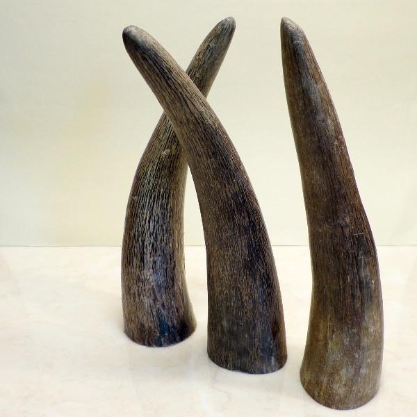 Hornspitzen ca. 15-17 cm
