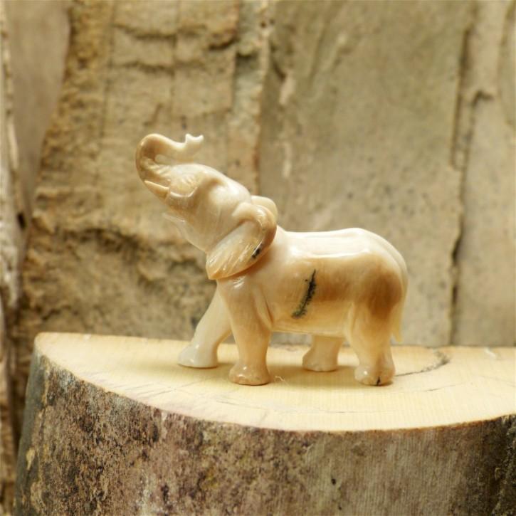 kleiner Elefant mit schönen Färbungen
