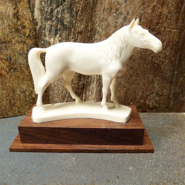 Pferd mit toller Rindenfärbung