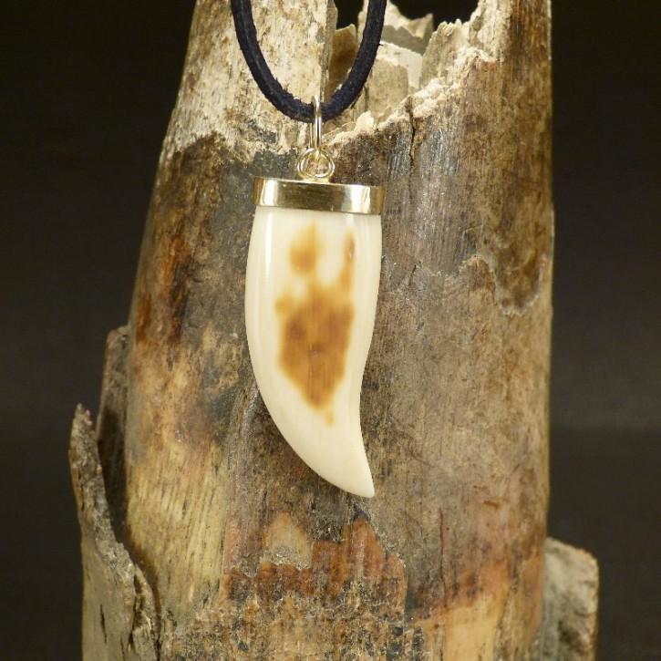 Zahn-/Krallenanhänger mit Goldfassung