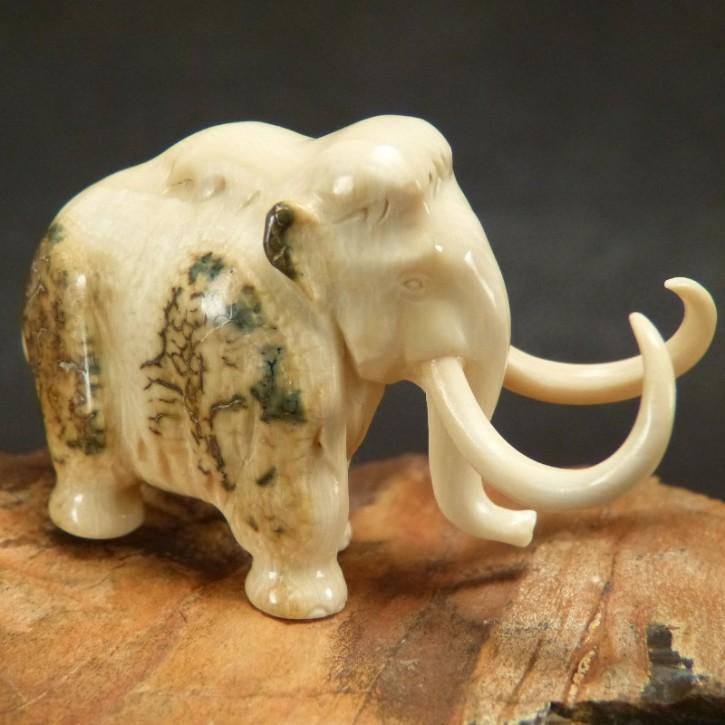 Mammut mit toller Rindenfärbung