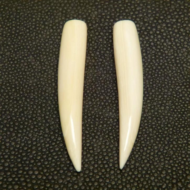 1 Paar Ersatzstoßzähne ca. 49mm lang