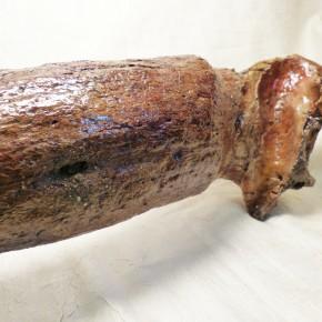 Horn eines Eiszeitbisons