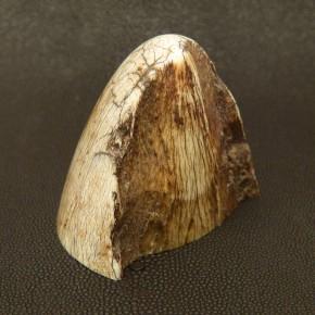 Zahnspitze mit natürlicher Bruchkante