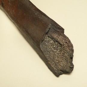 Fragment einer Mammut-Rippe