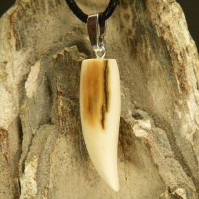 Mammut-Zahnanhänger mit toller Rindenfärbung