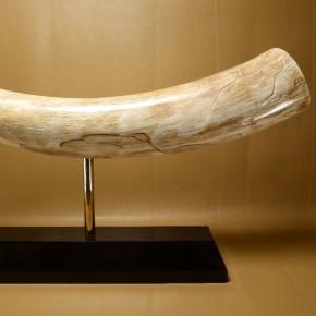 Mammut-Zahnspitze poliert auf Sockel