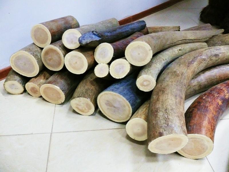 Mammut-1A Qualität