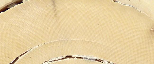 Maserung Mammut Detail
