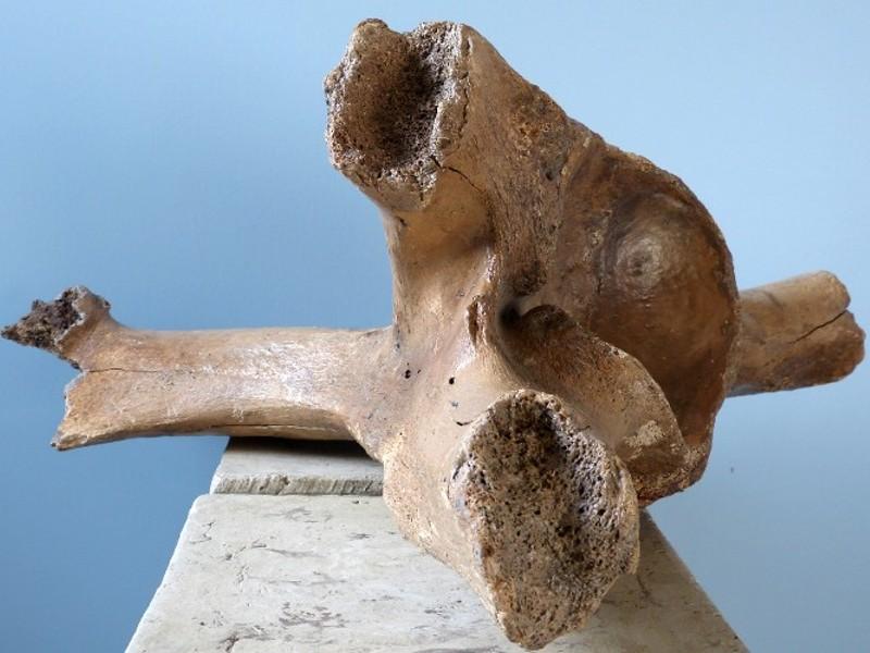 Mammut-Schulter1