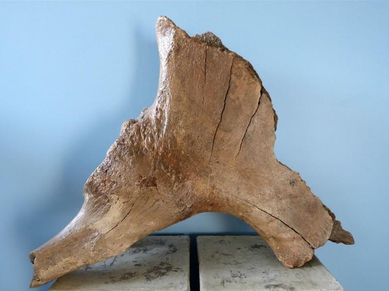 Mammut-Schulter3
