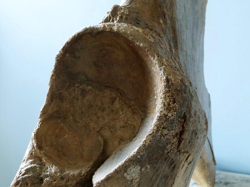 Mammut-Schulter5