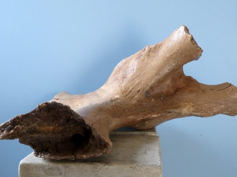 Mammut-Schulter7