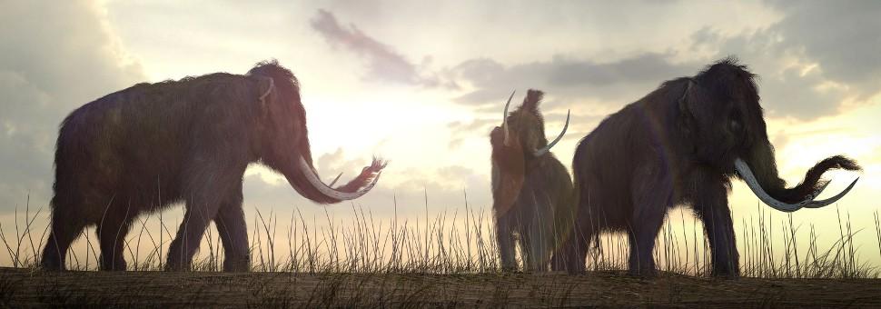 Mammuts am Horizont